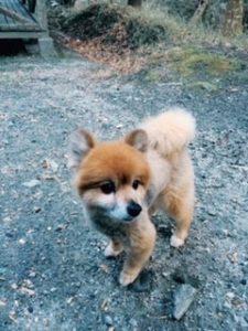 佐藤さん犬