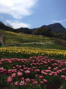 IMG_blog_kobayashi2